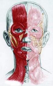 arcplasztika budapest
