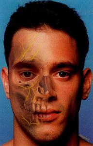 plasztikai sebészet érzéstelenítés ábra